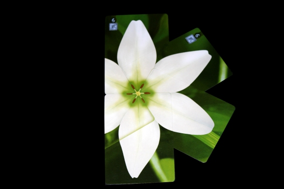 Lotus Petal Card Placement 2