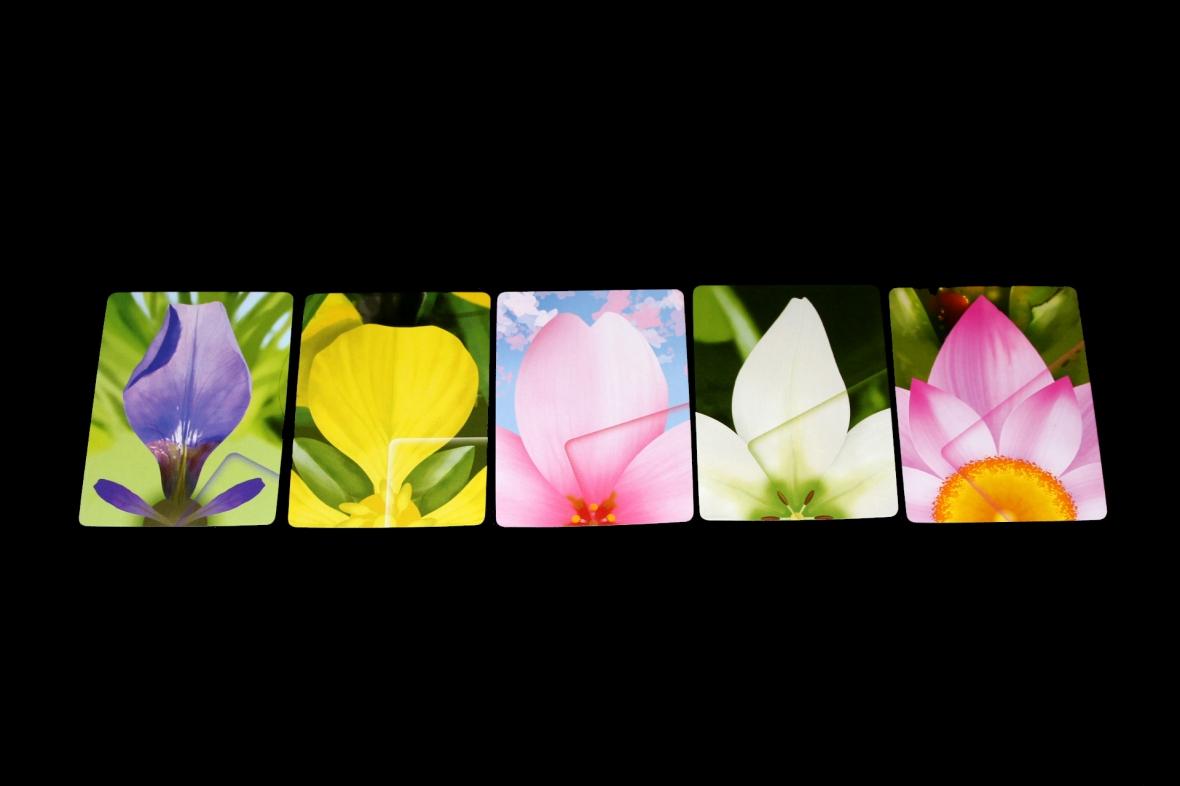 Lotus Petal Cards.jpg